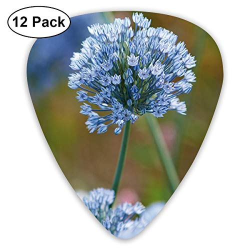 Gladiator Allium Guitar Picks Premium Picks for Acoustic Electric Guitars Bass Or Ukulele Includes Thin, Medium & Heavy Gauges