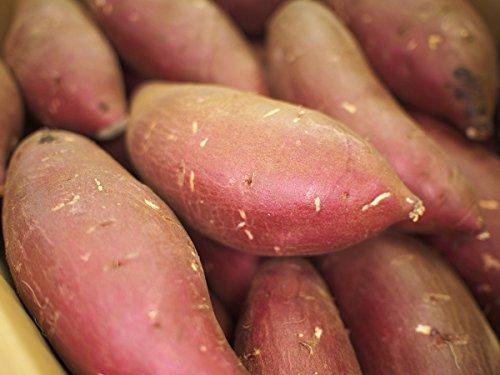 茨城県産 シルクスイート 絹(シルク)silksweet A等級 Mサイズ(約20本)5kg
