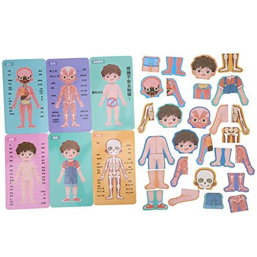 Tarjeta de conocimiento del cuerpo, juego de combinación de cognición de estructura de órgano de cuerpo humano de madera para niños para aprender partes(Rompecabezas de estructura corporal de niño)