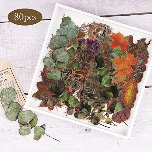 NogaMoga 80 piezas Pegatinas Scrapbooking de Plantas Flores Secas Decorativas Stickers Transparente Autoadhesivas Pegatinas para Álbumes de Recortes Planificador Diario Tarjetas Laptop Arte de Resina