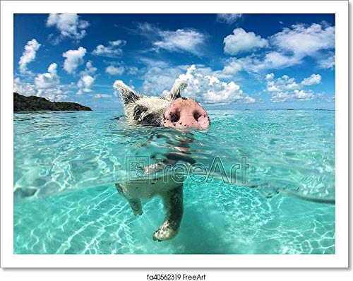 Wild, Swiming Pig On Big Majors Cay in The Bahamas Paper Print Wall Art (8in. x 10in.)