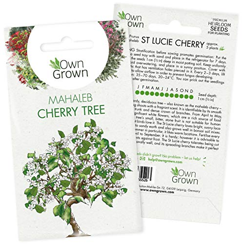 Grow Your Own Bonsai Trees: Premium Bonsai Seeds for St Lucie Cherry – 5 Mahaleb Cherry Bonsai Tree Seeds – Cherry Blossom Tree Plant, Dwarf Cherry Tree Seeds to Grow Your own Tree Bonsai by OwnGrown