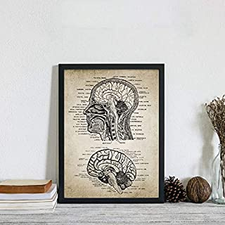 liwendi Retro Human Head and Brain Anatomy Canvas Art Print Poster Neuroscience Human Anatomy Painting Doctor Office Wall Art Deco 50 70Cm