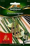 Quedlinburger Saatgut Zitronengras Samen