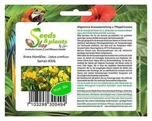 Stk - 30x Kreta Hornklee Lotus creticus Klee Blume Pflanzen - Samen #306 - Seeds Plants Shop Samenbank Pfullingen Patrik Ipsa
