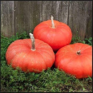 Cinderella Pumpkin Seeds, 10 Heirloom Seeds Per Packet, Non GMO Seeds