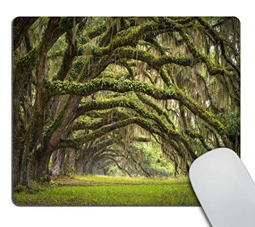 Smooffly Gaming Mouse Pad Custom,Oaks Avenue Charleston SC Plantation Live Oak Trees Forest Landscape Mousepad Non-Slip Rubber Rectangle Mouse Pads for Computers Laptop