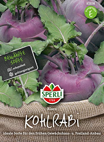 81108 Sperli Premium Kohlrabi Samen Blaro | Schossfest | Große Knollen | Nicht Holzig | Blauer Kohlrabi Saatgut