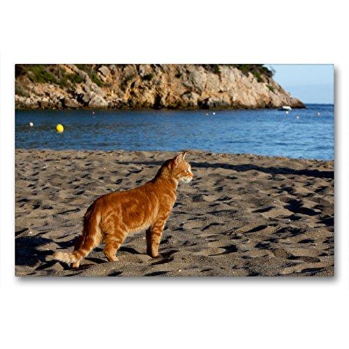 CALVENDO Premium Textil-Leinwand 90 x 60 cm Quer-Format Katze am Strand von Ibiza, Leinwanddruck von Antje Lindert-Rottke