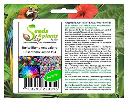 Stk - 25x Bunte Arcobaleno Crisantemo Blumen Pflanzen - Samen #94 - Seeds Plants Shop Samenbank Pfullingen Patrik Ipsa
