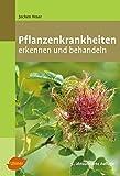 Pflanzenkrankheiten: Erkennen und behandeln