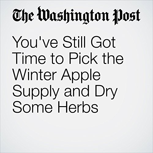 You've Still Got Time to Pick the Winter Apple Supply and Dry Some Herbs  cover art