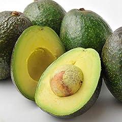 南国フルーツ メキシコ産 アボカド 12玉(200gx12玉)