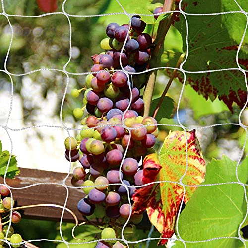 Best <strong>Garden for Vines</strong>