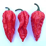 Wayland Chiles Bhut Jolokia Seeds (Red)