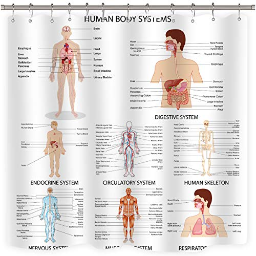 Riyidecor Human Organ Shower Curtain Anatomy Organ Body Structures Cell Life Medical Illustration Decor Bathroom Set Polyester Waterproof 72Wx72H Inch with Plastic Hooks 12 Pack