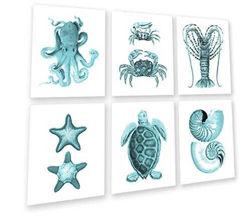 Coastal Decor Turquoise Wall Art Set of 6 Unframed Prints Sea Turtle Seashells Starfish Octopus