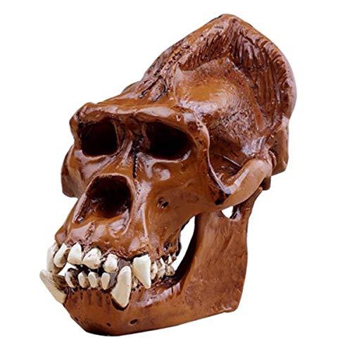 ALBB Orangutan Modelo del craneo - Escultura Cientifico Figura de Resina turistica - Desmontable Medico Modelo de ensenanza, Juguetes educativos para la Ciencia