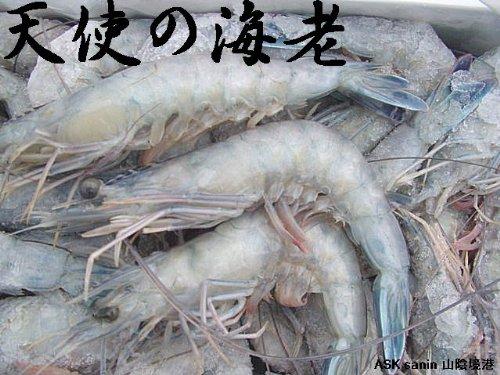 お刺身用 天使の海老1kg ニューカレドニア産