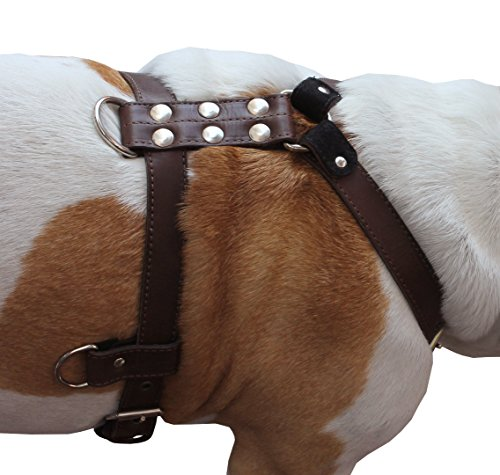 """Genuine Leather Dog Harness Medium to Large 25""""-32"""" Chest, 1"""" Wide Adjustable Straps (Brown)"""
