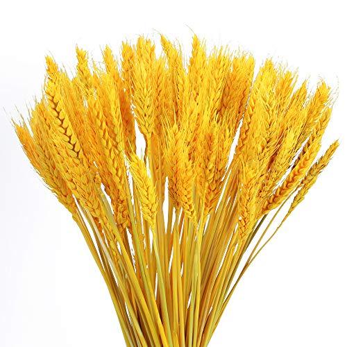NAHUAA100PCS Flores Secas Ramo de Flores Ramo de Trigo Trigo Seco Natural para Decoración de jarrón Boda hogar Oficina Cocina Fiestas o Regalo Espigas de Trigo Dorado