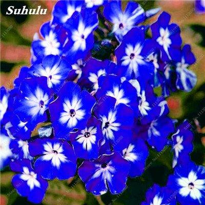 150 Pcs Nerium Graines Oleander plantes en pot semencier japonais Jardin Décoration Bloom Graine Facile à cultiver purifient l'air 1