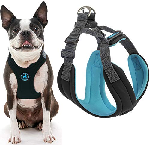 Gooby Dog Harness - Black, Medium - Convertible Sport Step-in Neoprene Small Dog Harness with Adjustable Neck Fastener - Perfect on The Go Harness for Small Dogs or Cat Harness