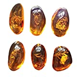 VORCOOL 5pcs Amber Fossil with Insects Samples Stones Crystal Specimens Home Decorations Collection Oval Pendant (Random Pattern)