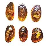 Vosarea 5pcs ambre fossile avec des échantillons d'insectes pierres spécimens cristal spécimens décorations pour la maison collection pendentif ovale (motif aléatoire)