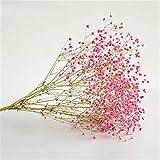 WANGJBH Trockenblumen Gypsophila Natürliche Getrocknete Blumen Blumenstrauß Bunte dekorativ Baby Atem für Hochzeit Dekoration DIY Handwerk Künstliche Blume (Color : Pink)