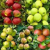 zellajake 30+ Seeds Apple Tree Seeds Mixed Varaieties,Fruit Sweet Delicious