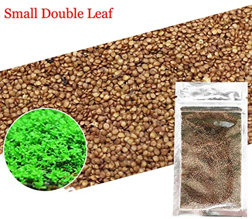 Aquarium Grass Plants Seeds,Aquatic Double Leaf Carpet Water Grass,Oxygenating Weed Live Pond Plant Seeds,Fish Aquatic Water Grass Decor,Easy to Plant Grow Maintain (Green-S D L)