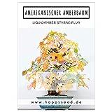 Außergewöhnliche Bonsai Samen mit hoher Keimrate - Pflanzen Samen Set für deinen eigenen Bonsai Baum (1x Amerikanischer Amberbaum)