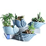 Sun-E 5.5 Inch Blue Conch Ocean Series Ceramic Base Serial Set Succulent Plant Pot Cactus Plant Pot Flower Pot Container Planter with Drainage Hole Idea 4 in Set(Plants Not Included)