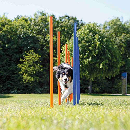 TRIXIE Agility Slalom Weave Poles for Dogs, with 12 Poles Included, Blue/Orange (3206)