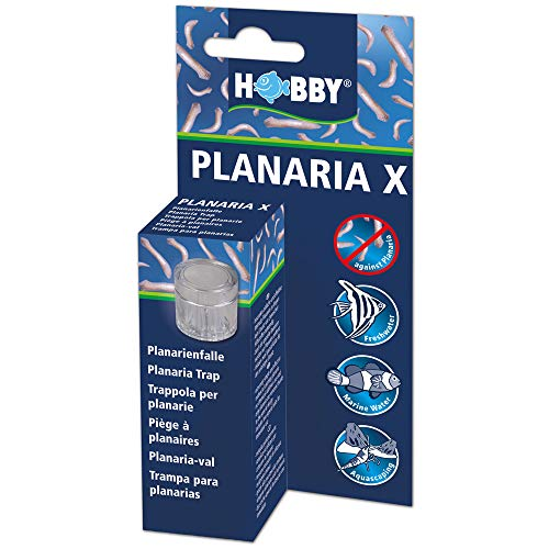 Hobby Planaria X