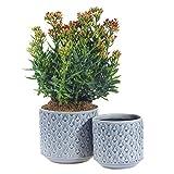 Snake Ceramic Plant Pot