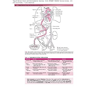 Rapid Review Gross and Developmental Anatomy: With STUDENT CONSULT Online Access