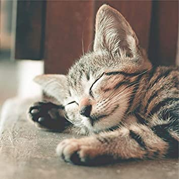 Peaceful Melodies for Cats