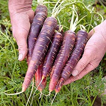 VISTARIC 50pcs chaud/sac Coriandre herbe persil en pot Graines vert Healthiy herbes à rendement élevé légumes Fructueux Spices Garden Bonsai usine