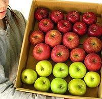 りんご 訳あり 福袋 5kg 青森もしくは北海道産 リンゴ