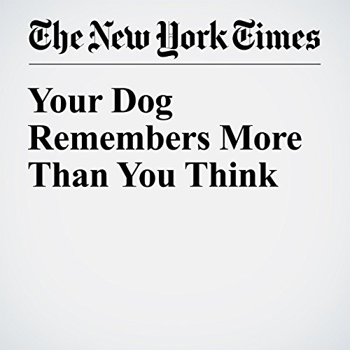 Your Dog Remembers More Than You Think audiobook cover art