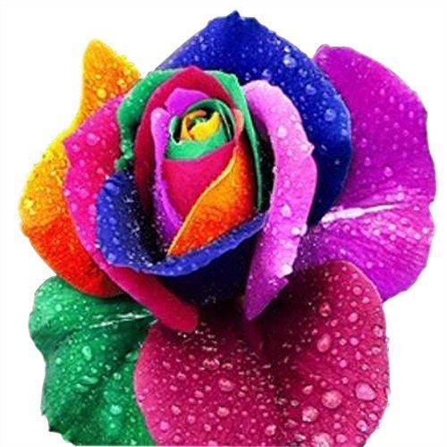 Regenbogen Rose/Einhornrose/Bunte Rose/ca. 50 Samen/Rosensamen/Geschenk für Verliebte/Geburtstagsgeschenk