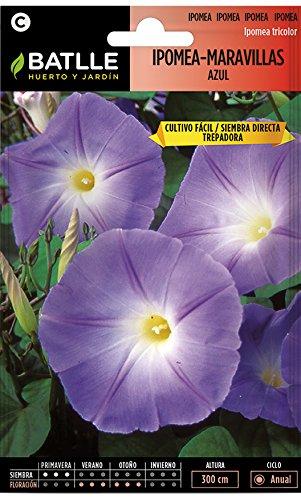 Semillas de Flores - Ipomea-Maravillas Azul - Batlle