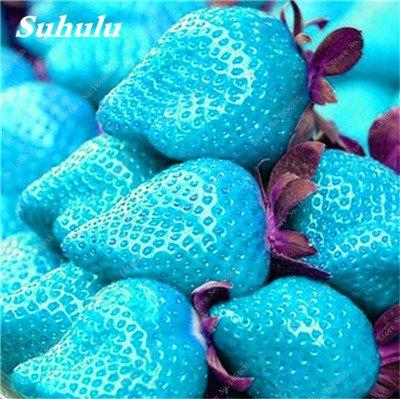 Big Promotion! 1000 Pcs Four Seasons en pot Graines Strawberry Super Sweet Seeds fruits Bonsai plantes Semences Maison et Jardin 12