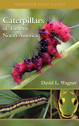 Compare Textbook Prices for Caterpillars of Eastern North America: A Guide to Identification and Natural History Princeton Field Guides, 62 1st Edition Edition ISBN 9780691121444 by Wagner, David L.