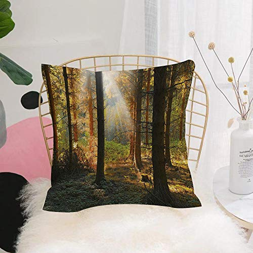 Nuovo Moda Morbido Copricuscino,Set di fattoria, Sunset View of Dark Pine Forest in Autumn Fogg,Poliestere/Cotone Decorativo Fodera Quadrata per Cuscino per Divano Camera da Letto Casa Auto 45x45cm