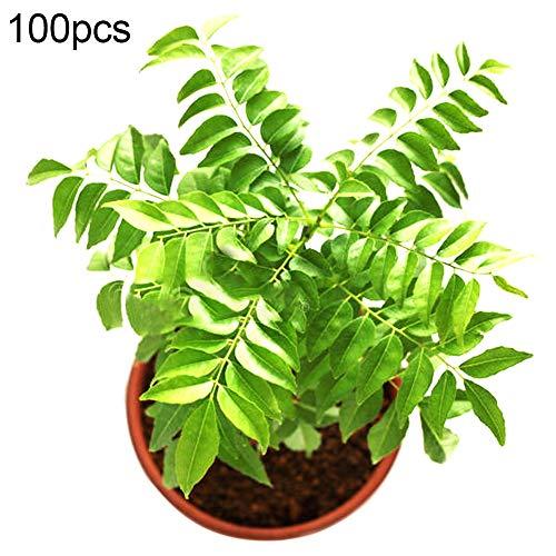 TankMR Farms Seeds 100 piezas de semillas de árbol de hoja de curry culinaria para plantas de jardín al aire libre decoración para jardín balcón/patio