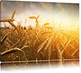 Getreide im Sonnenlicht Format: 120x80 auf Leinwand, XXL