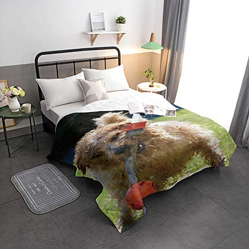 Advancey Reversible Lightweight Bedspread Coverlet Dog at Play Super Soft Washable Microfiber Quilts for All Season, 98x98 inch